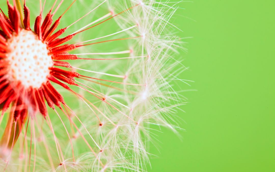 Pyłki zmorą alergika